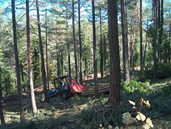 Actuació de millora d'un bosc